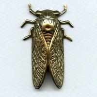 Cicada Bug of Summer Oxidized Brass 49mm (1)